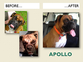 APOLLO.Before.After