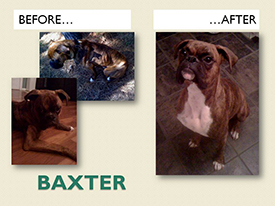 BAXTER.Before.After