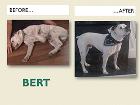 BERT.Before.After