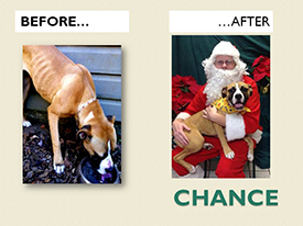 CHANCE.Before.After