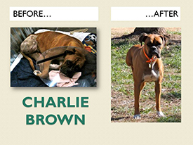 CHARLIE-BROWN.Before.After