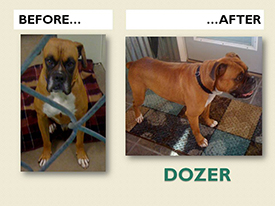 DOZER.Before.After
