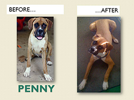 PENNY.Before.After